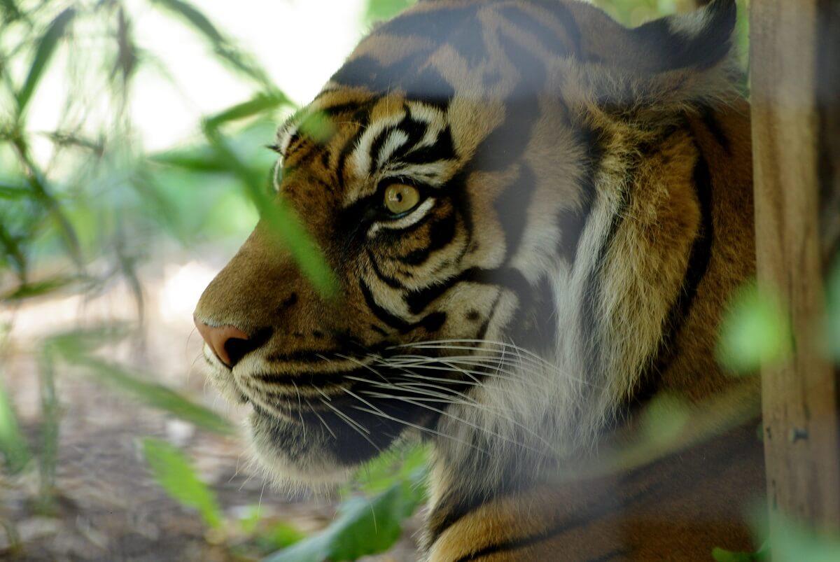 Camden Zoo