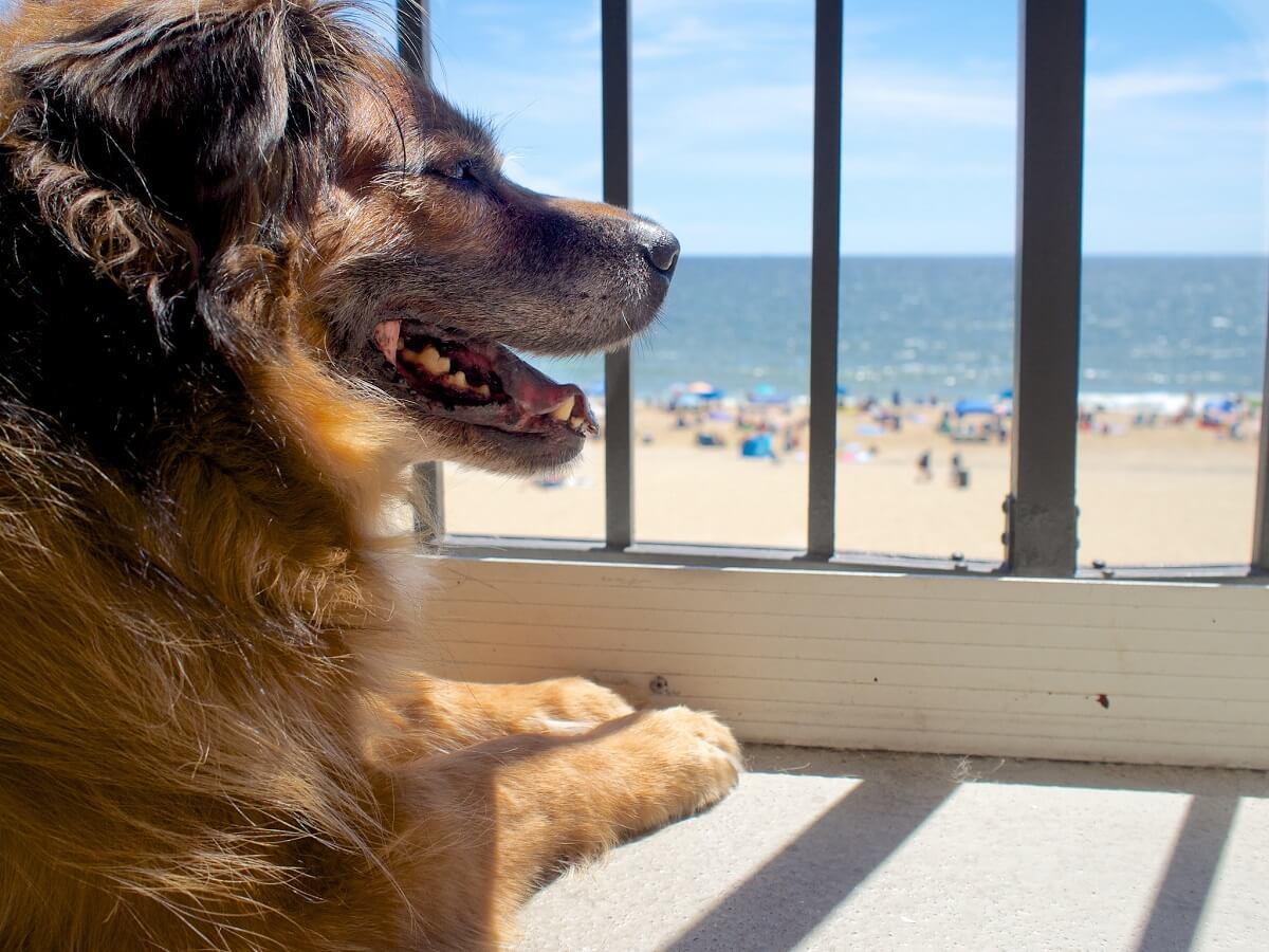 Risultati immagini per strutture pet friendly