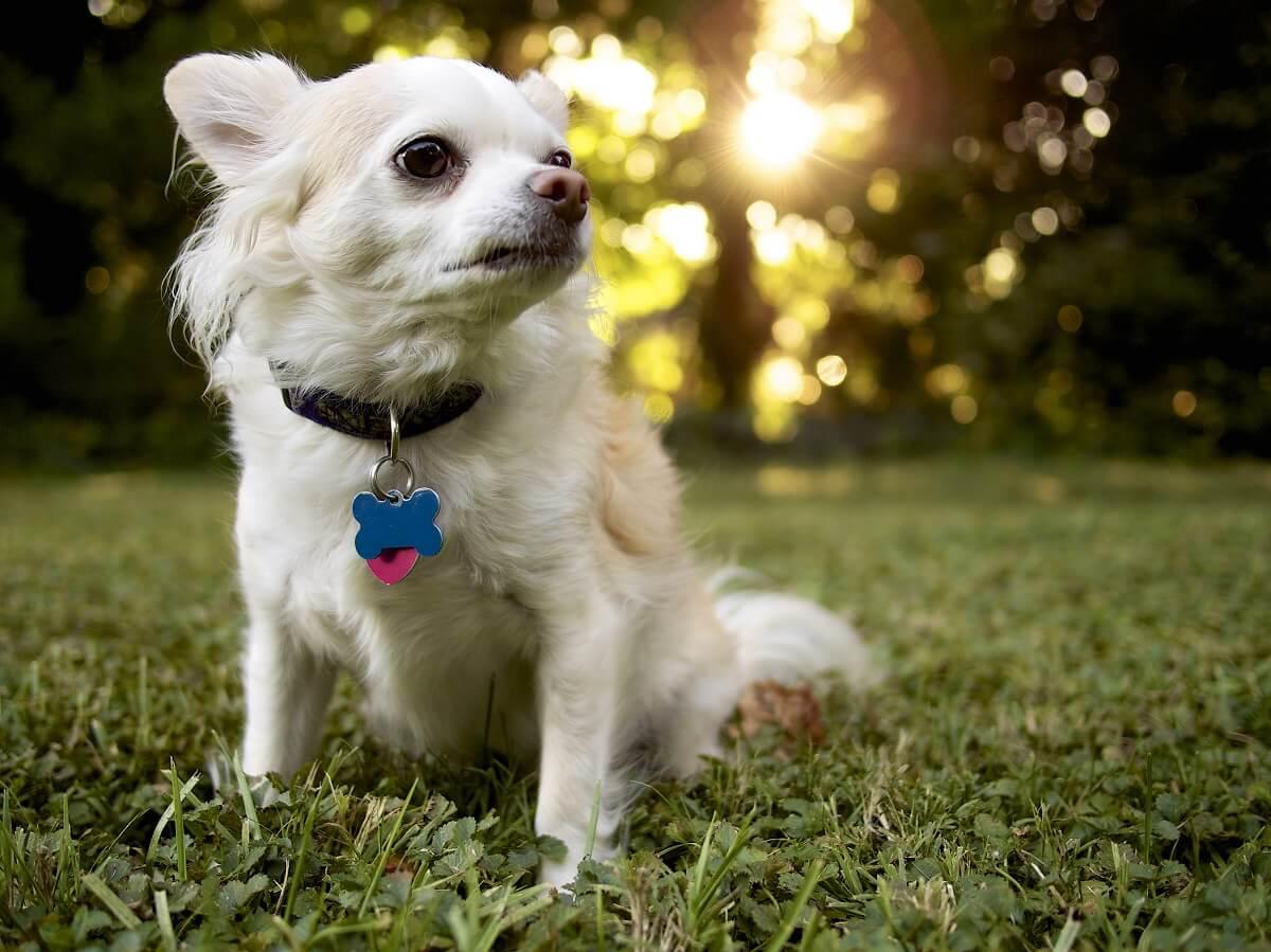Trivago Dog Friendly