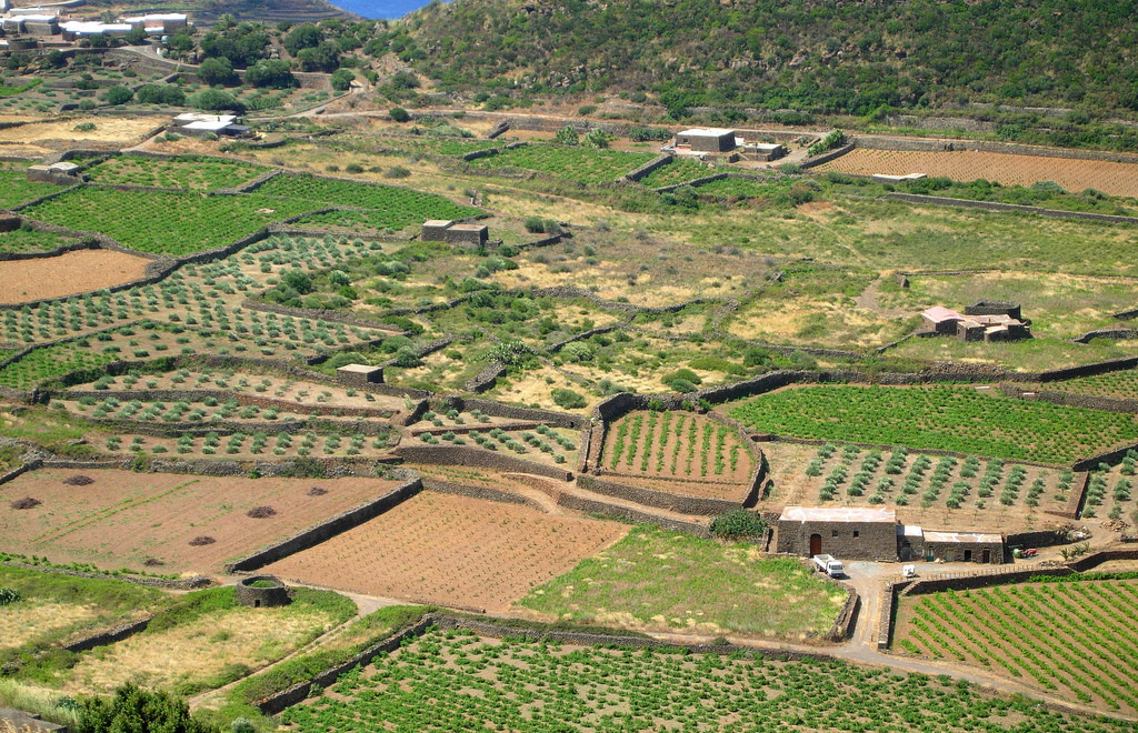 Pantelleria - Campagnia