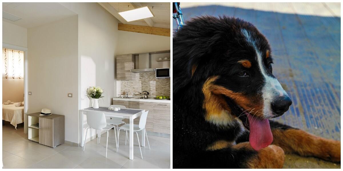 Hotel per cani di taglia grande in Italia - Room5