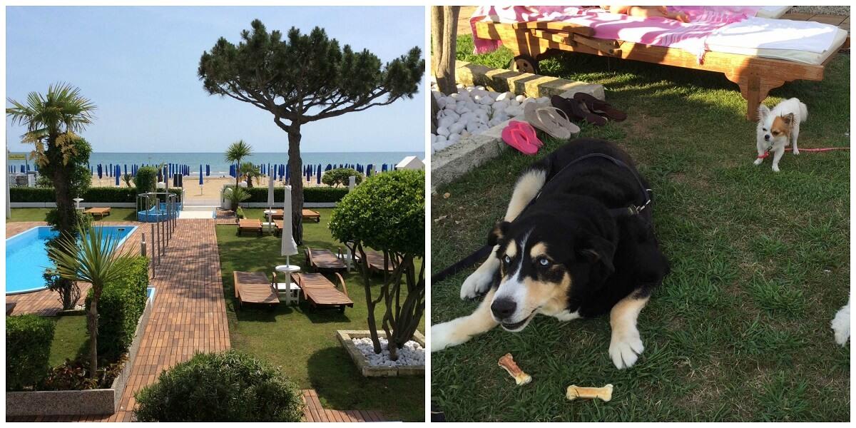 Hotel per cani di taglia grande in Italia