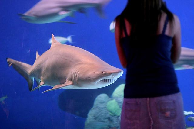 Denver Aquarium scuba diving