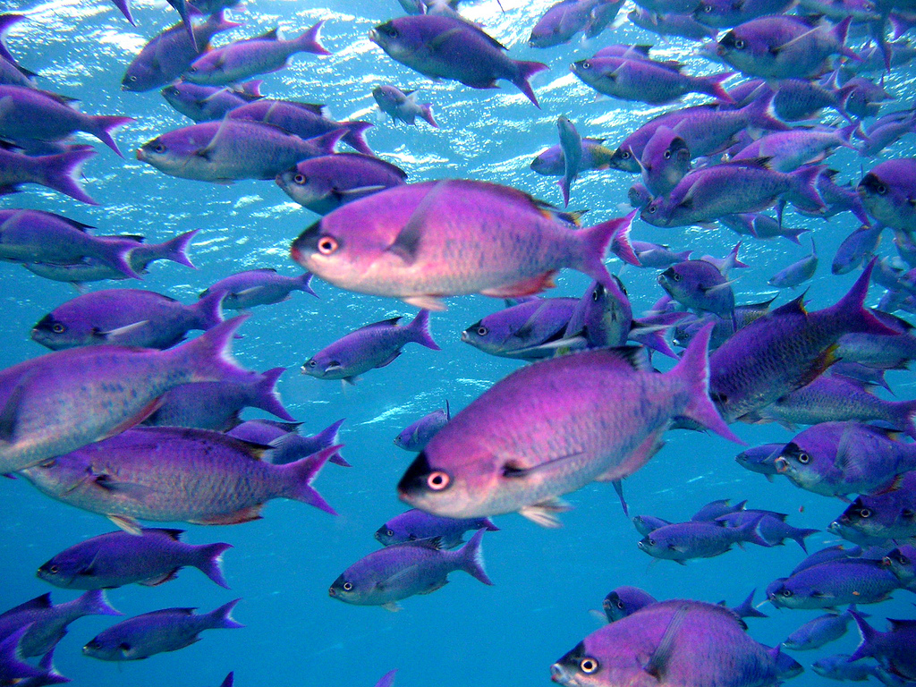 US Virgin Islands Scuba Diving