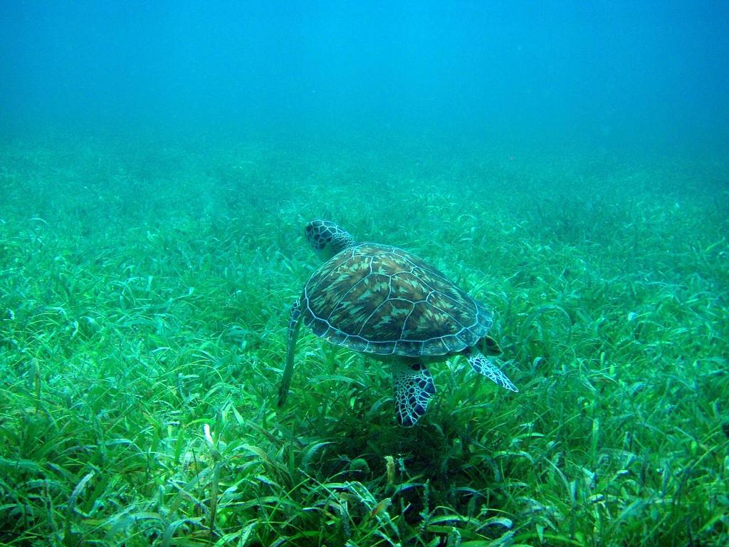 Puerto Rico turtle scuba diving