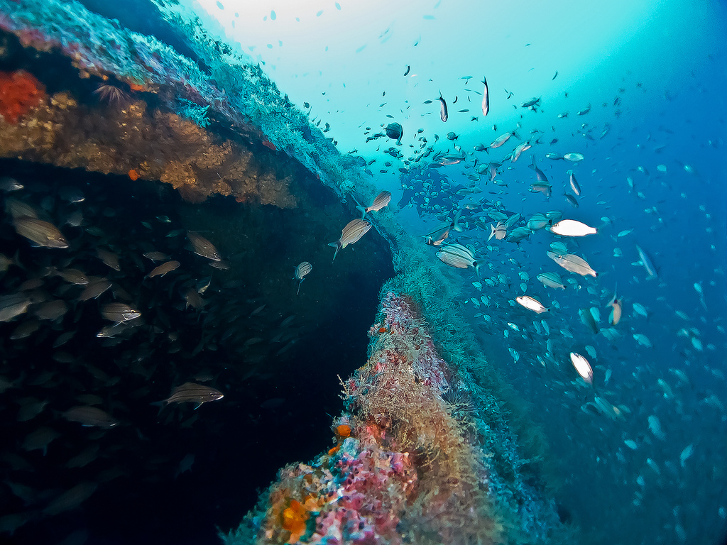 Barrier Islands North Carolina scuba diving