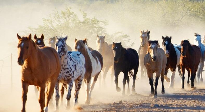 Los Caballeros Ranch horses