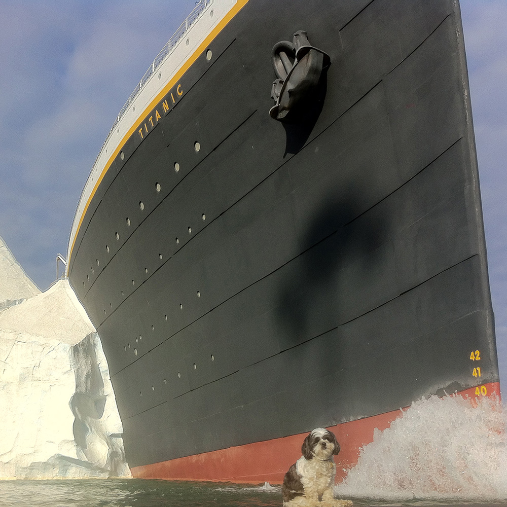 Photo by Naomi Harris of her rescued dog Maggie at the Titanic Museum in Pigeon Forge
