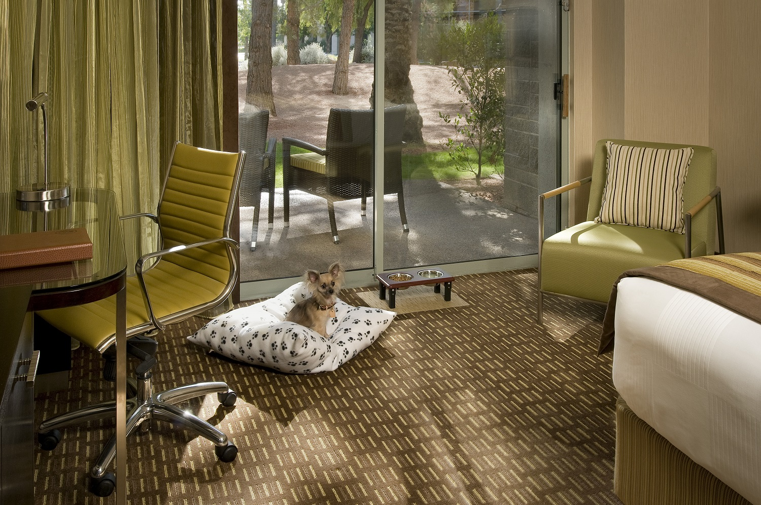 Dog-Friendly Hyatt Hotel Scottsdale