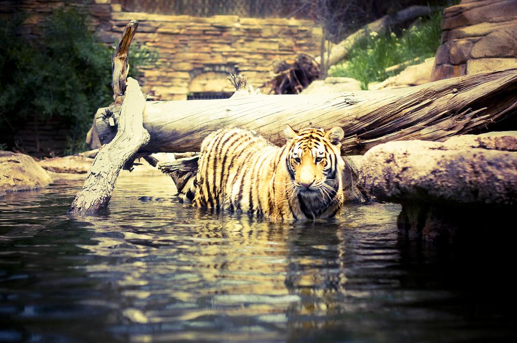 Hogle Zoo Salt Lake City Family Trips
