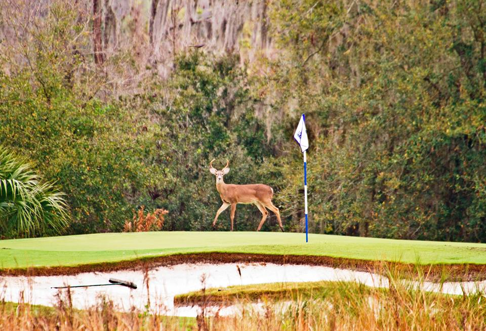 Wildlife on the Ritz-Carlton's course!