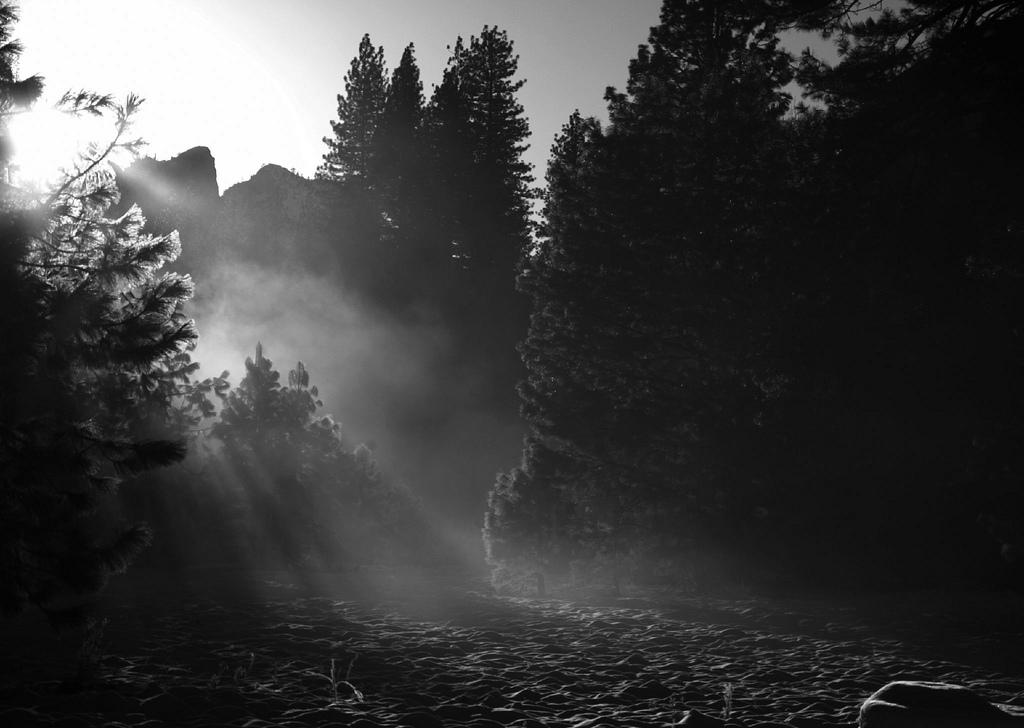 Yosemite Van Tour