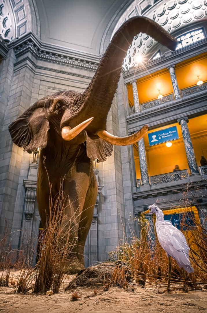 Free museums in Washington DC