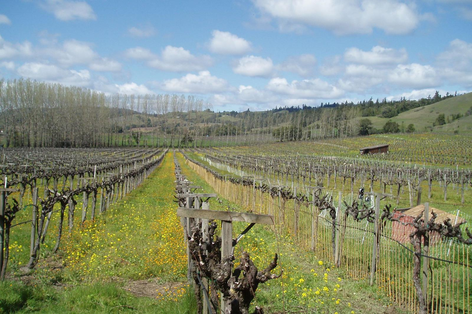 Navarro Vineyards, Mendocino