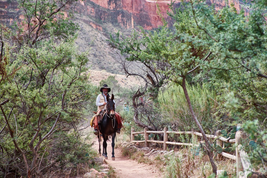 Pack Mule journey through the Grand Canyon