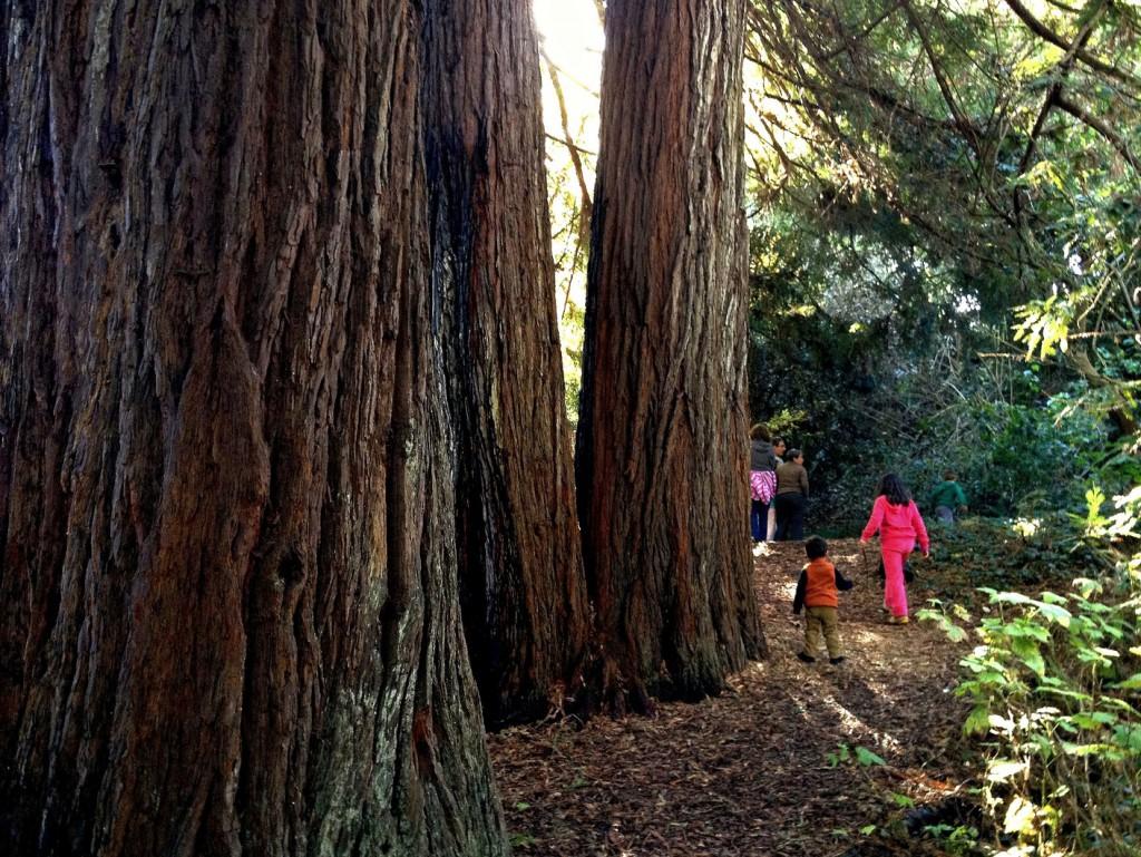 Redwood Grove in Botanical Garden