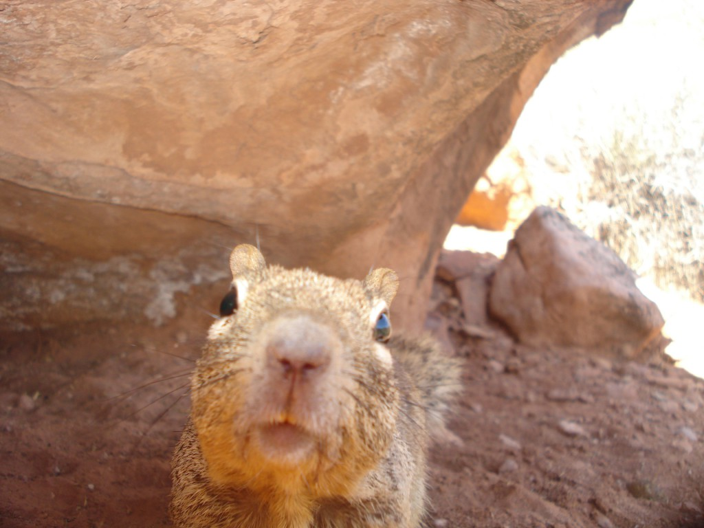 Squirrel Selfies while camping
