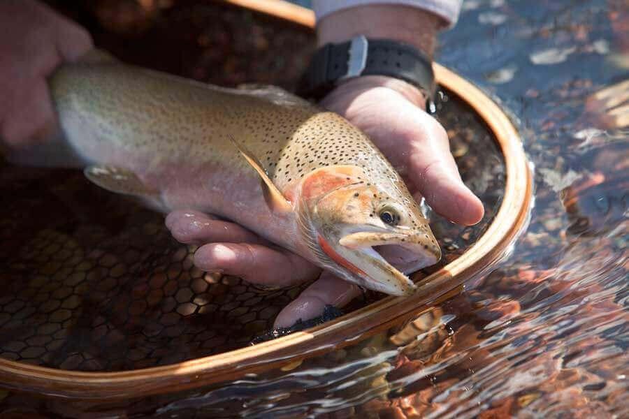 Fishing resorts in Montana
