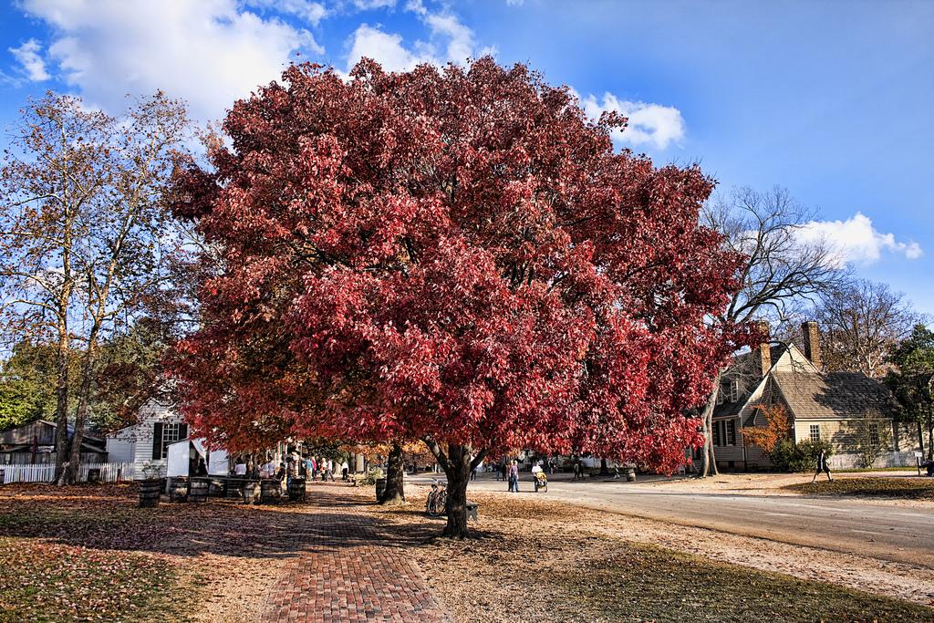 Fall in Williamsburg Virginia