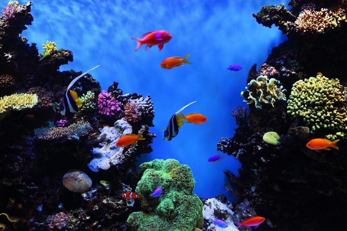 Monterey Bay Aquarium San Francisco Day Trips
