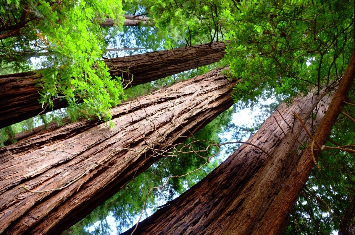 Muir Woods San Francisco Day Trips