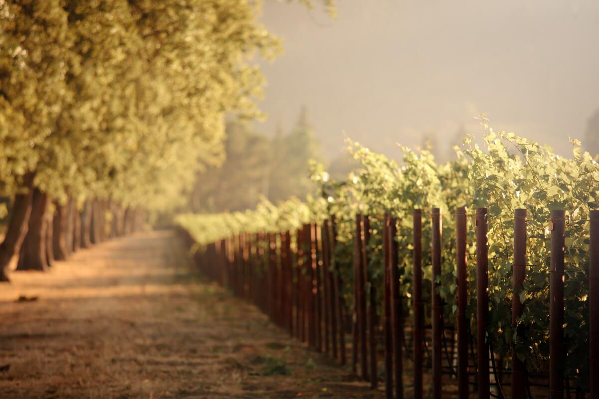 Vineyards Napa Valley San Francisco Day Trips