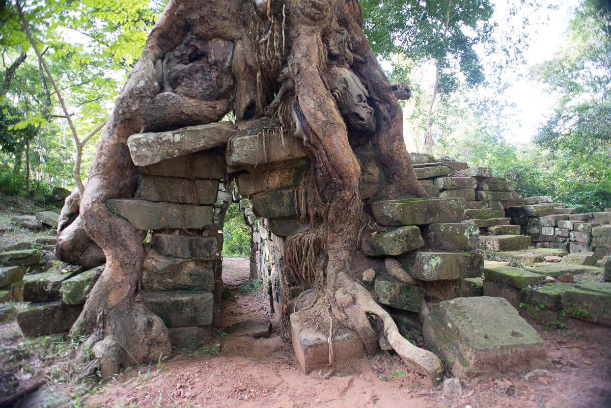 Cambodian Jungle temple