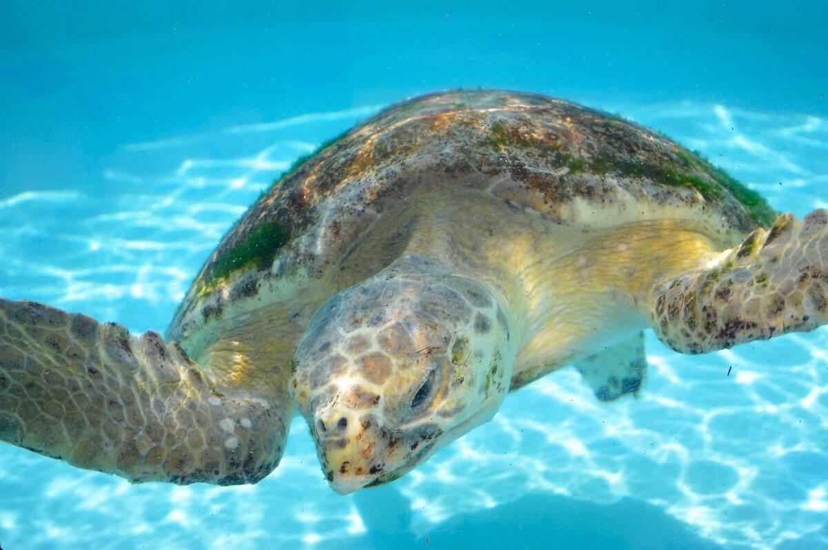 Sea Turtles Florida Keys