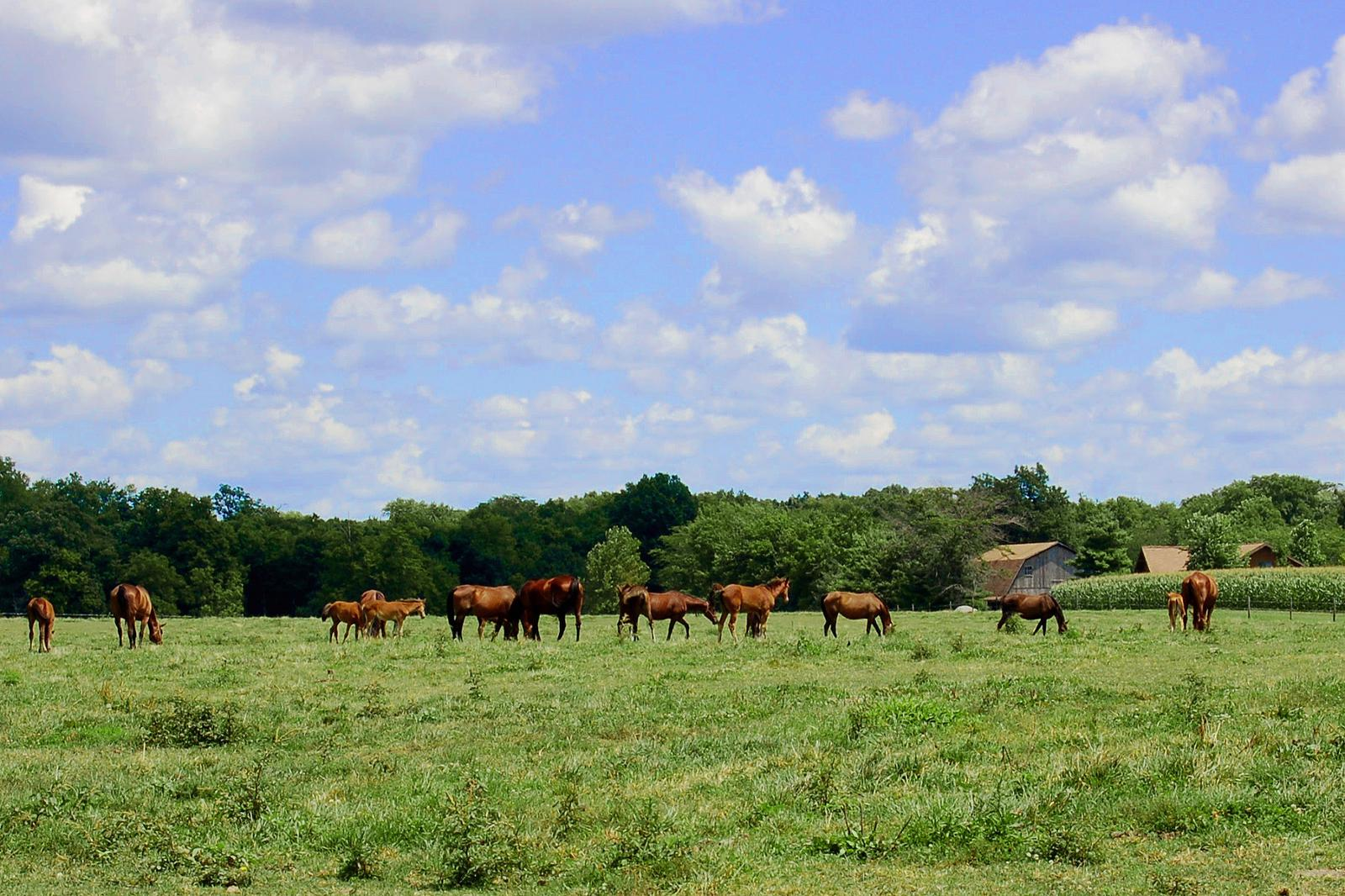 Arthur-Illinois-Horses-in-amish-country