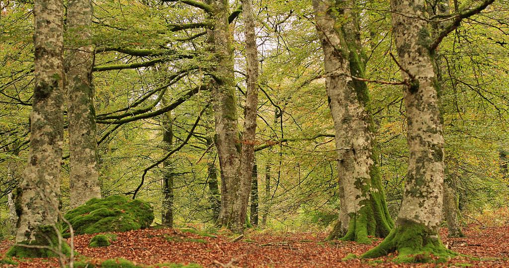 mundo rural Selva de Irati Navarra