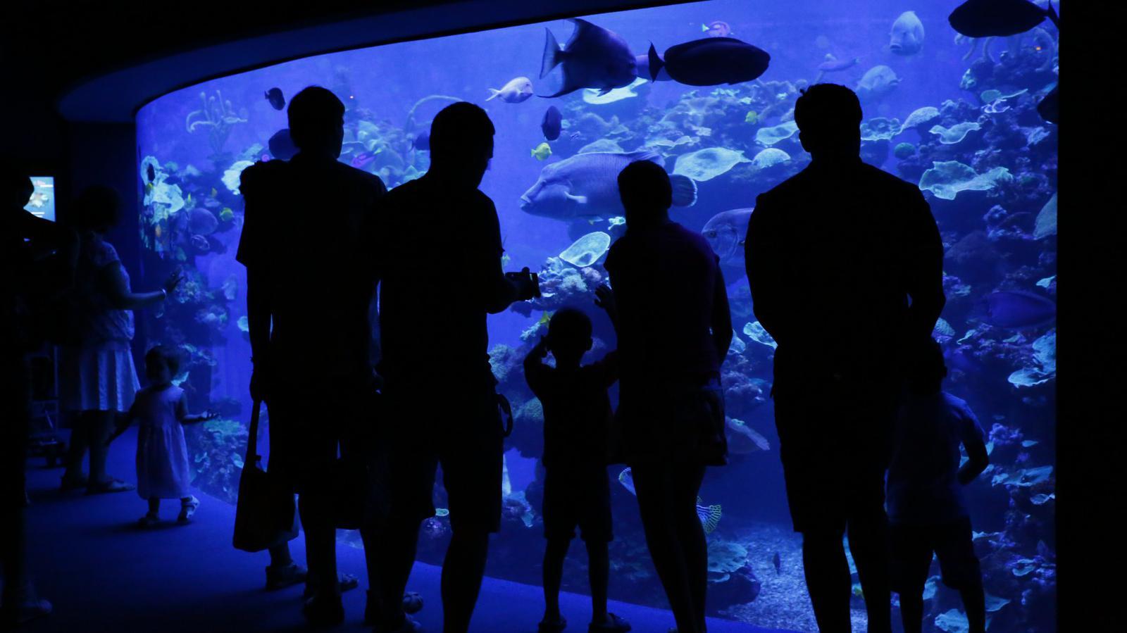 palma aquarium guia mallorca niños