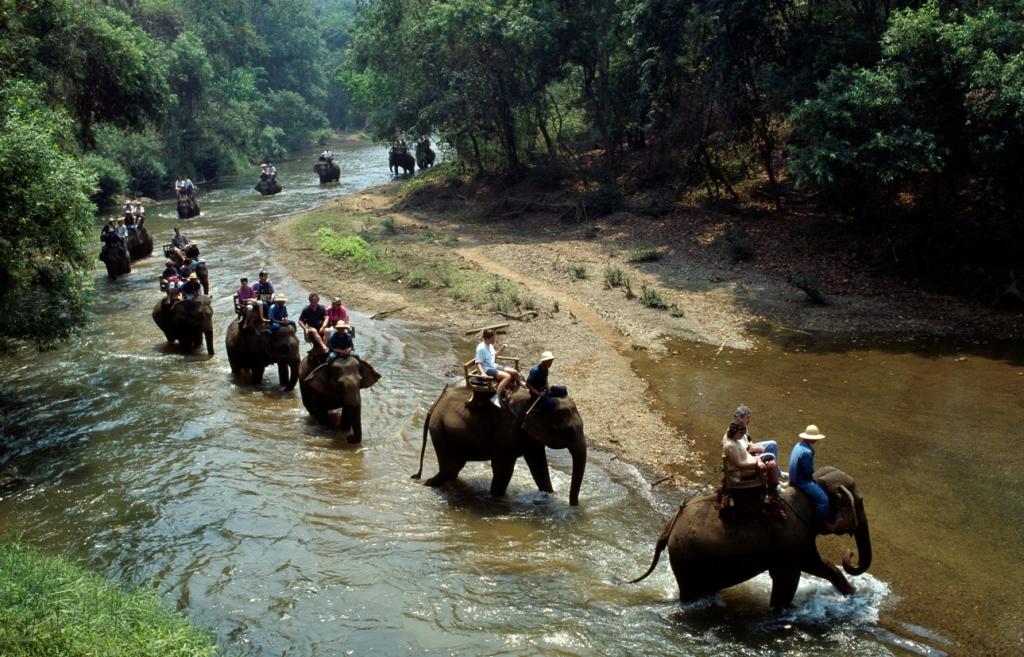 Elefanti-a-Khao-yai