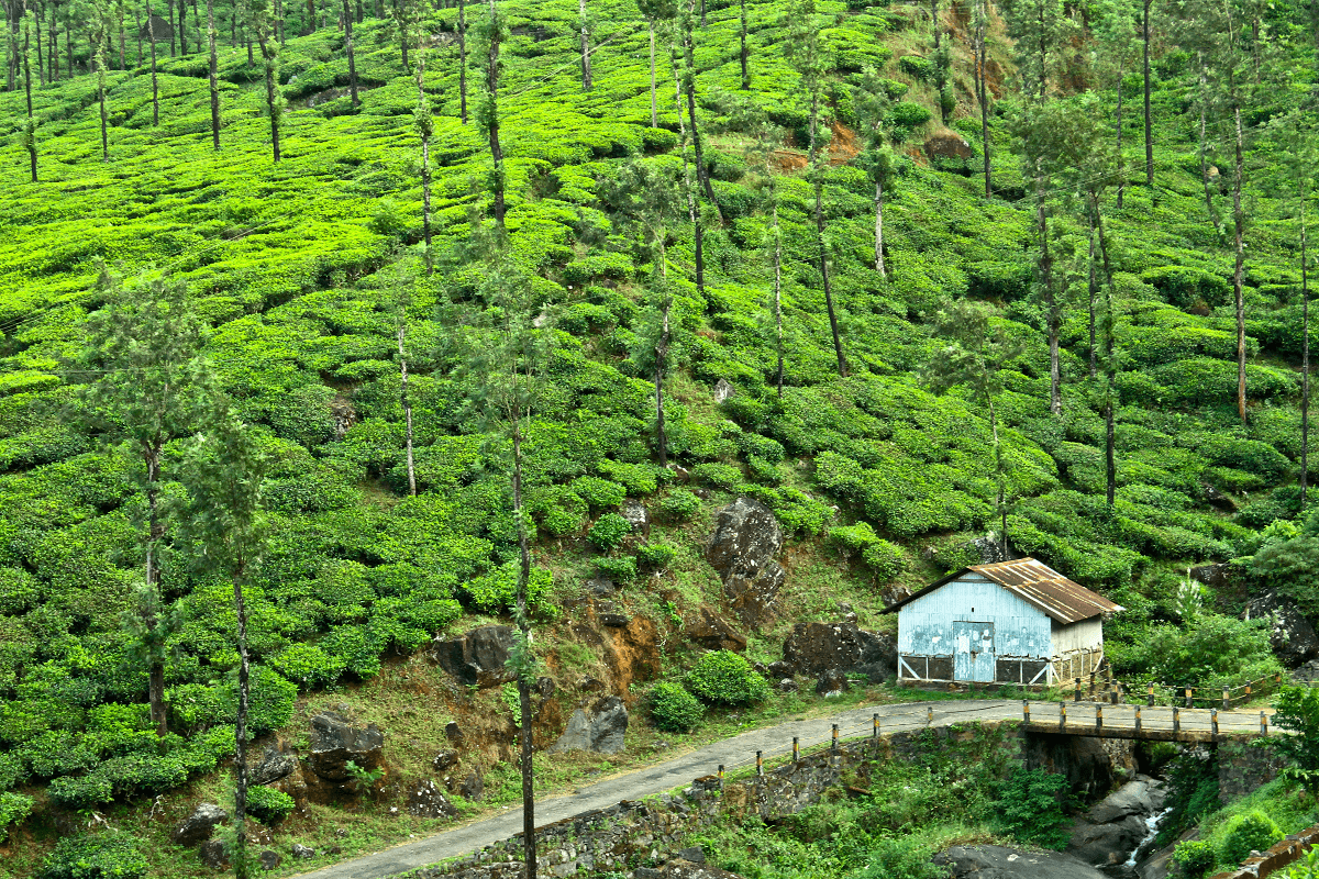 Best value destinations 2016: Wayanad