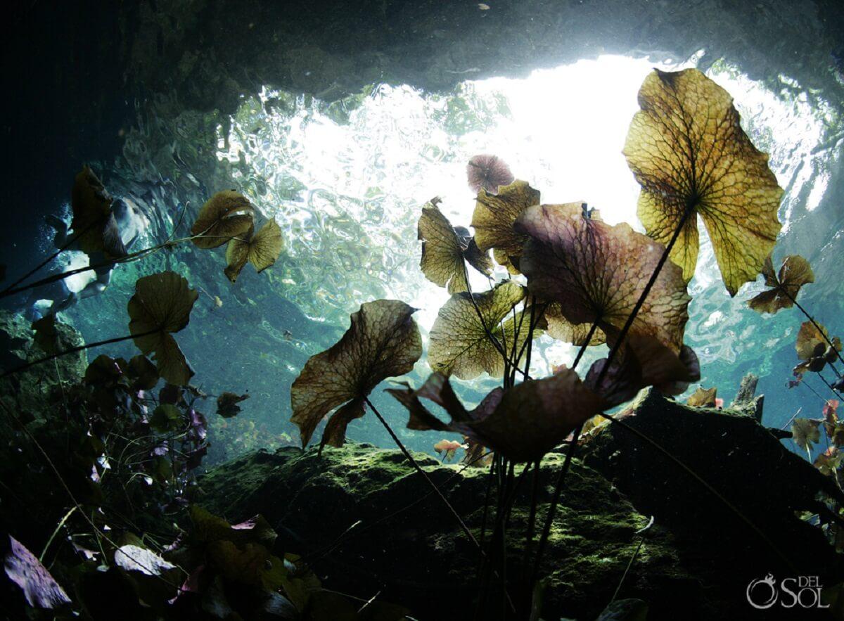 lirios cenotes