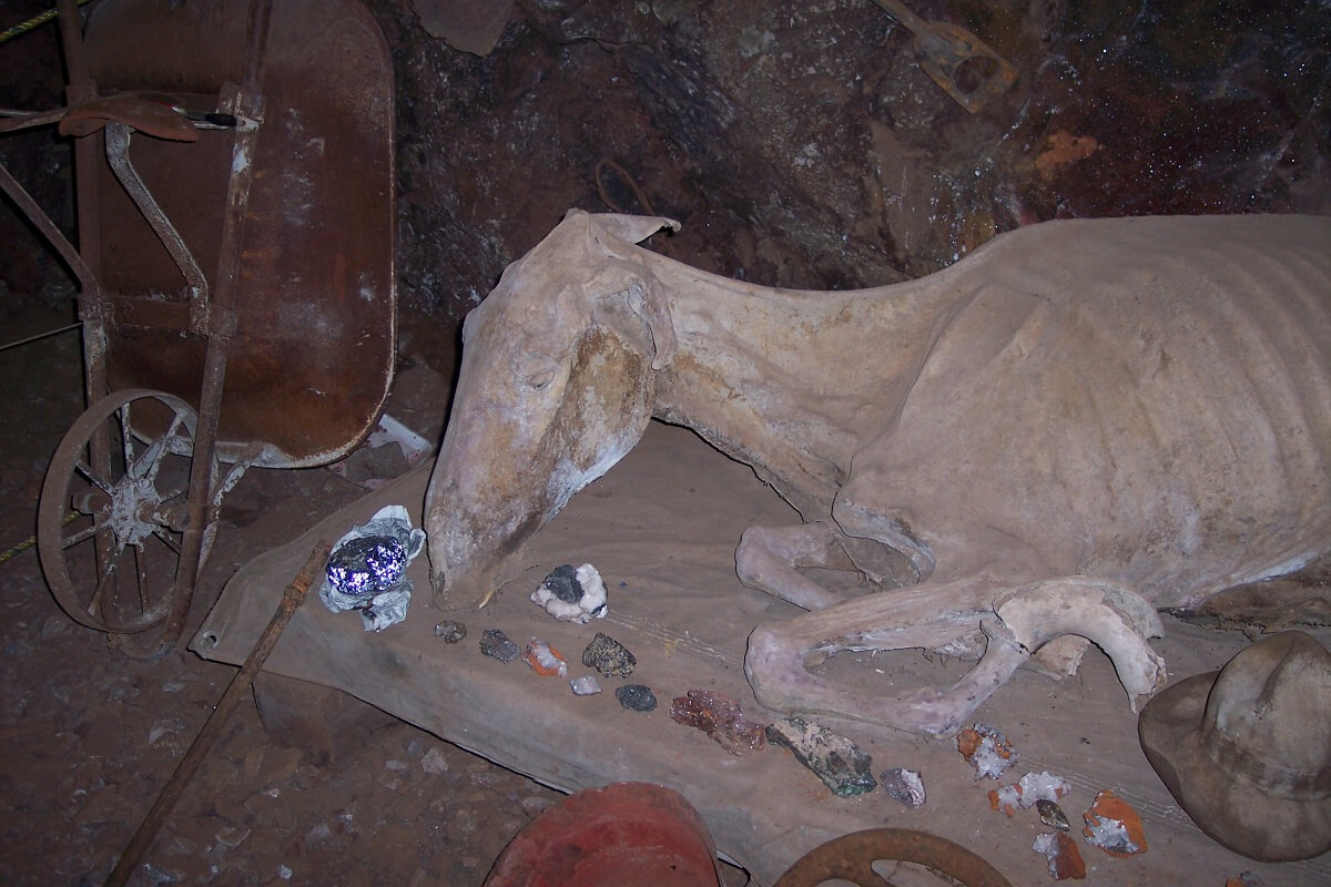 Mula momificada Durango