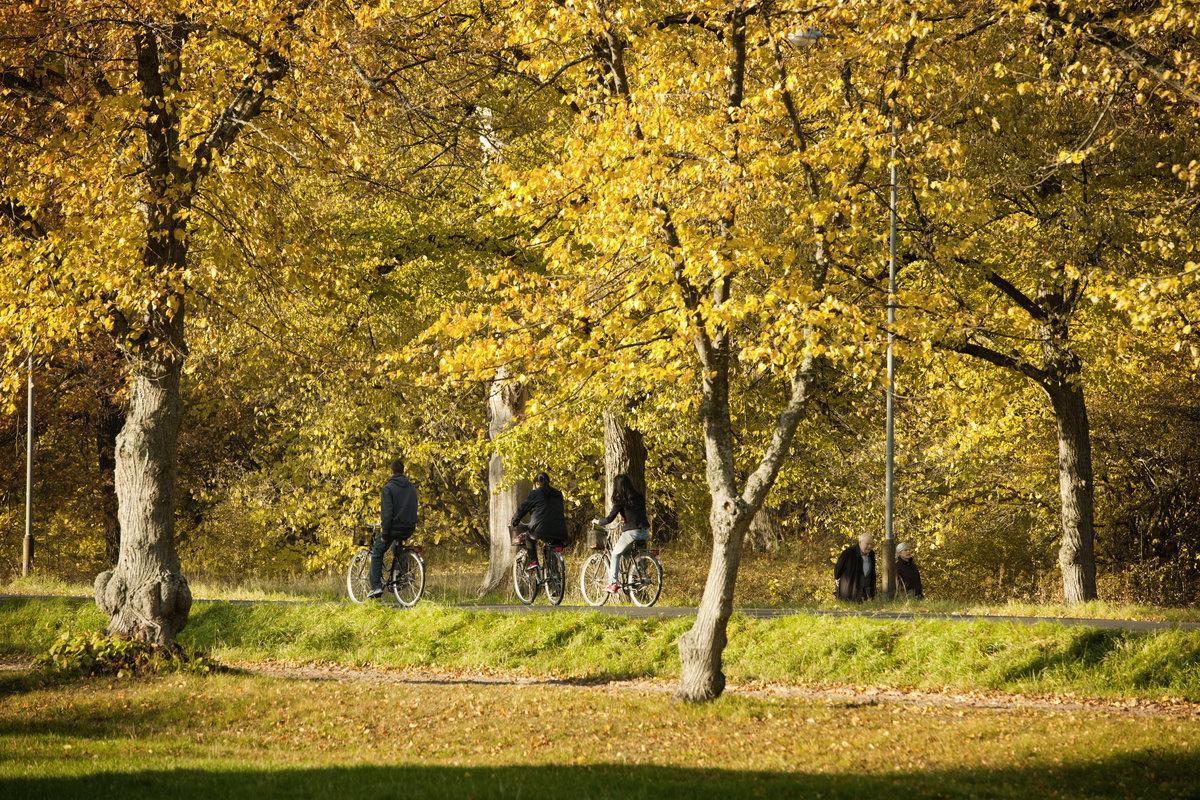 Djurgården Tukholmassa