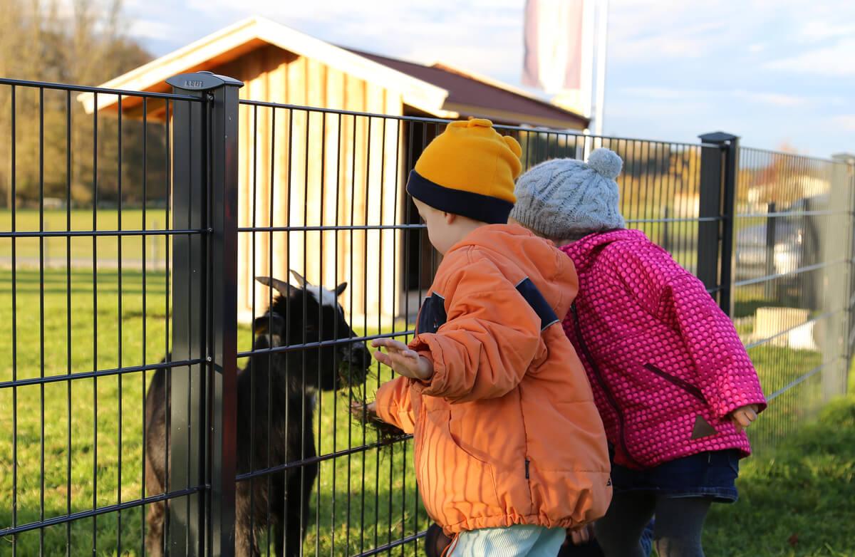 Ferienhof Tiergarten børn og dyr