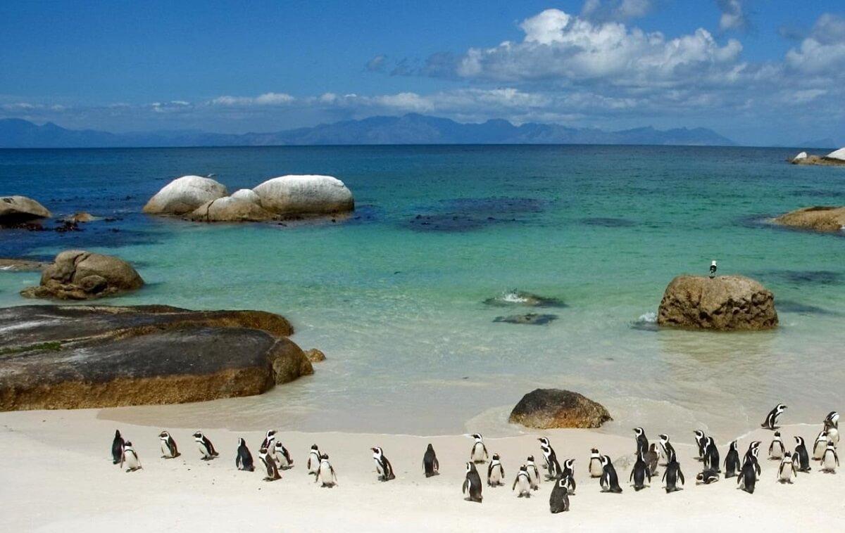 Plage de Boulders Beach - Afrique du Sud