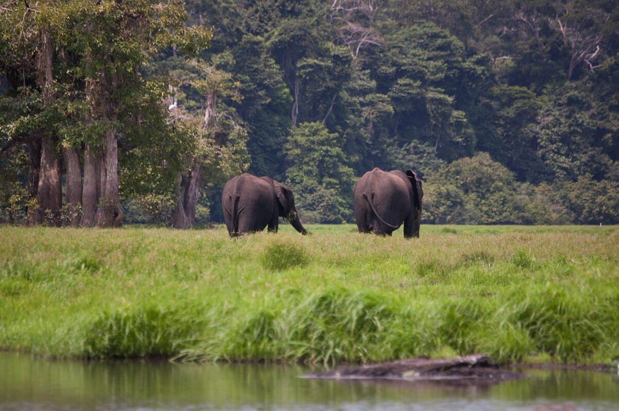 Plage de Loango - Gabon