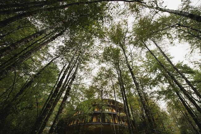 Vue extérieure du Reino Fungi Lodge