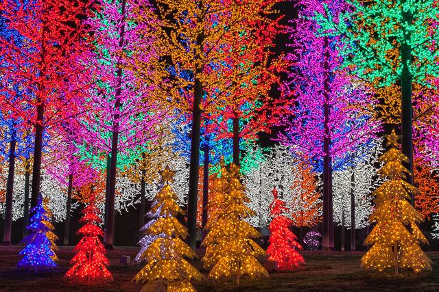 Jardin illuminé et sapins de lumières pour Noel - Shah Halam - Malaysie