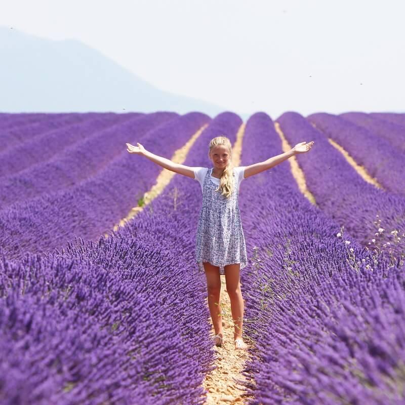 Plateau de Valensole - Alpes de Haute Provence - France