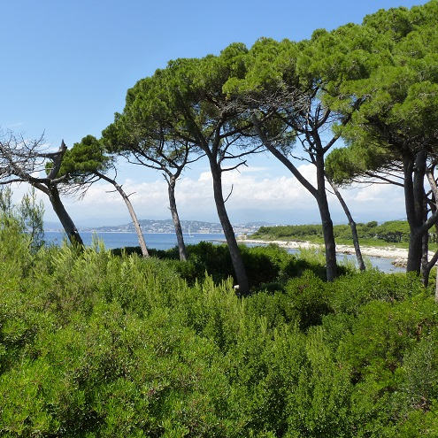Arbres et vue sur la mer sur l'Ile Sainte Marguerite à Cannes