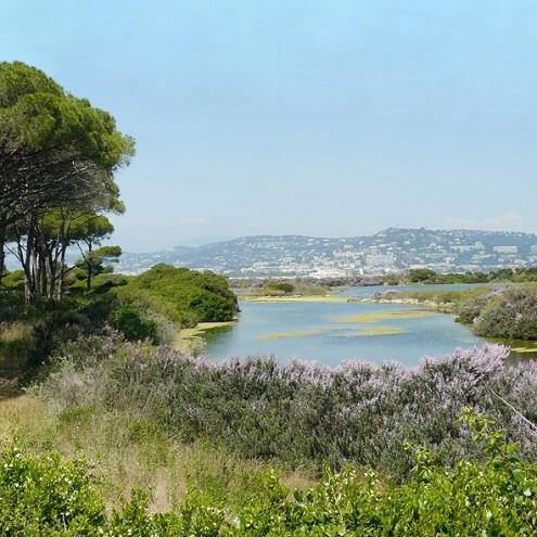 Etang du Bateguier sur l'Ile Marguerite à Cannes