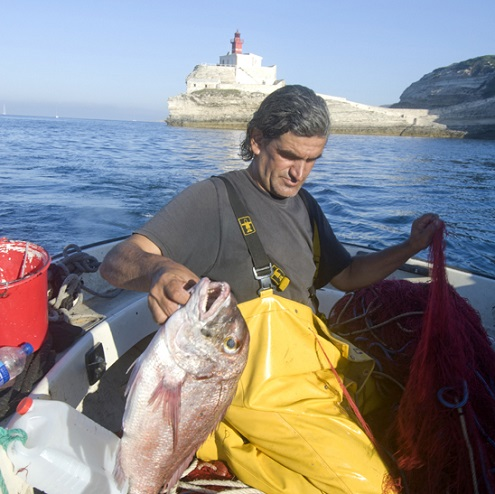 Un pêcheur local attrappe un poisson à Bonifacio