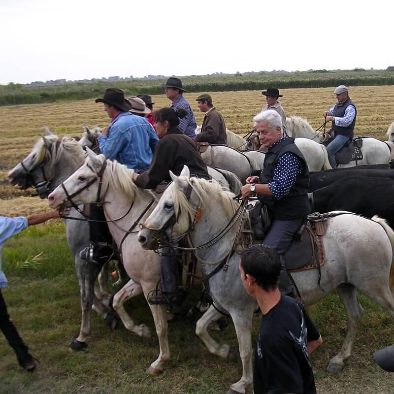 Abrivado à cheval - Camargue Gardoise