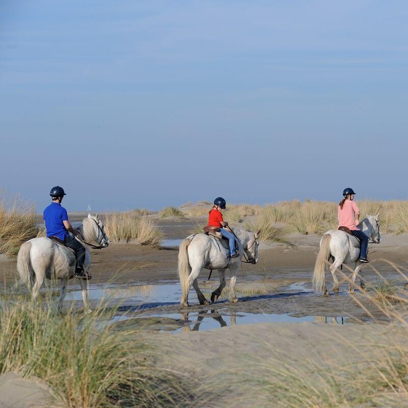 Balade à cheval - Le Grau du Roi-Port Camargue