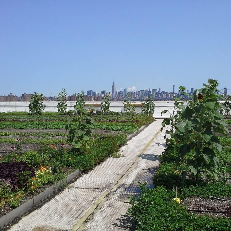 Potager de Brooklyn Grange