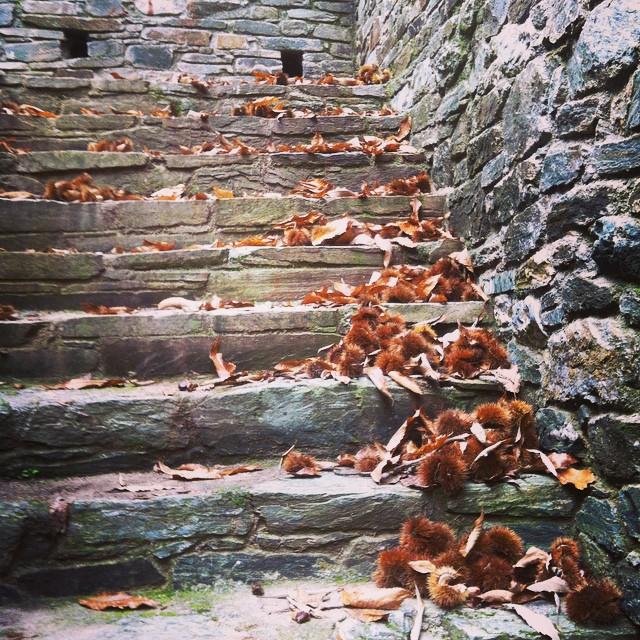 lionsnine - autumn pilio instaRoom5-sto-pilio-pelion-instagram-images-trivago