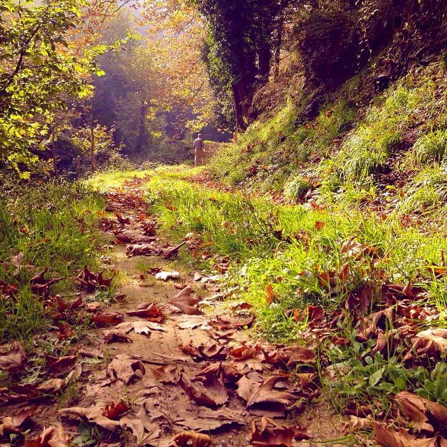 lionsnine - autumn tsagkarada pilio instaRoom5-trivago-sto-pilio-pelion-instagram-images